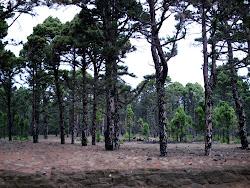 Bosques de La Hoya del Morcillo