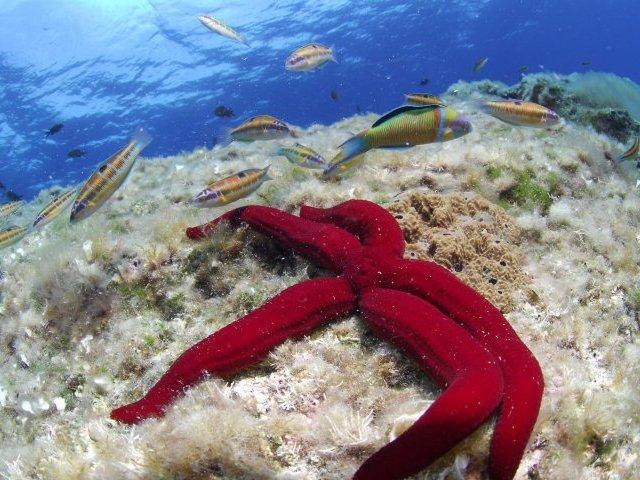 estrella de mar. Estrella de mar