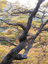 """Las excepciones de la naturaleza a las """"reglas"""" del bonsai"""
