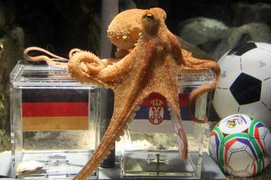 http://3.bp.blogspot.com/_O9g_Xi76m_o/TDPeXxGeVqI/AAAAAAAAABM/ml-uwSkQzdA/s1600/06-26-octopus-paul_full_380.jpg