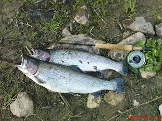 Flugfiske Tillbaks i Baltak igen