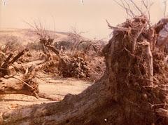 Ο Αγώνας των Μεγαριτών για την προστασία του φυσικού περιβάλλοντος - Πολυτεχνείο Νοέμβρης 1973