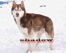 Eight below shadow