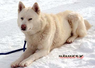 Eight below shorty