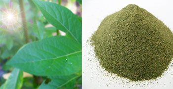 Kratom Extract Experiences