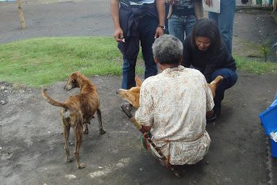 Survailance rabies di Kabupaten Ngada