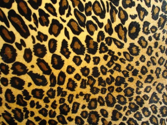 this animal print desktop - photo #9