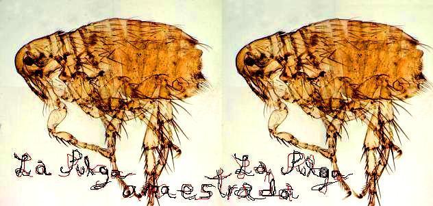 La pulga amaestrada