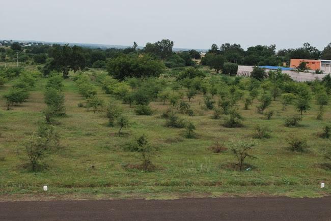 Sainik School Bijapur -tamarind Plantation