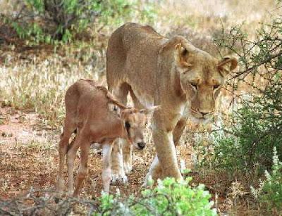 Kaminiak: el corazón de una leona Kamuniak