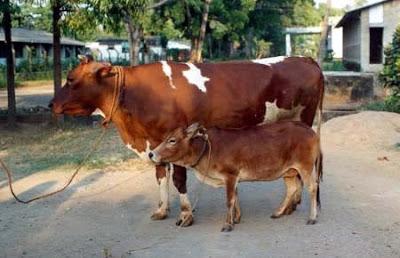 Десятка самых маленьких животных мира