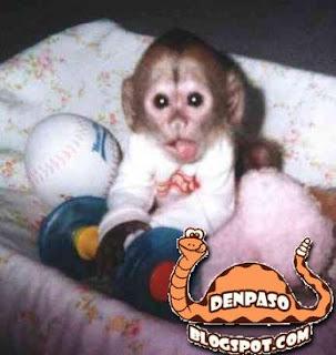 прикольные фото обезьяны
