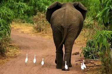 continuem seguindo... estamos no caminho certo.