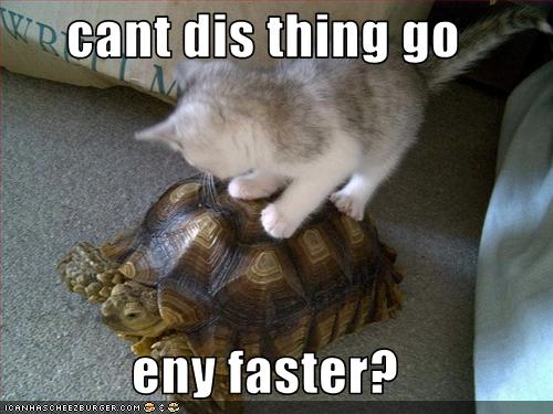 Funny turtle pictures with words - photo#8