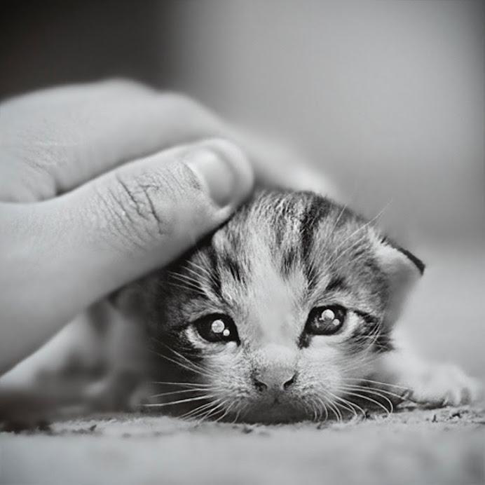 Amo le coccole....amo sentire la tua mano su di me....