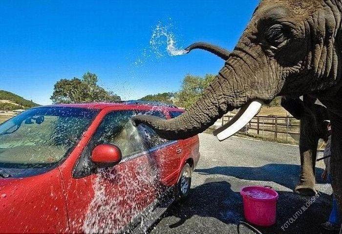 Cuci Mobil Ala Gajah