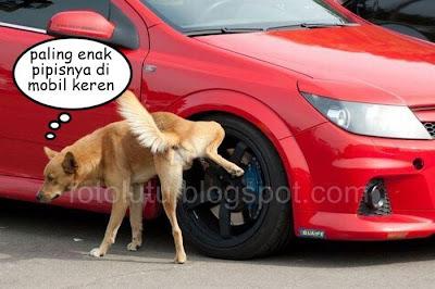 Foto Lucu Mobil Keren Dipipisin Anjing