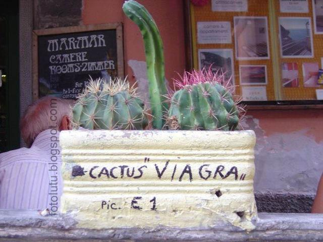 Kaktus Bisa Tegang
