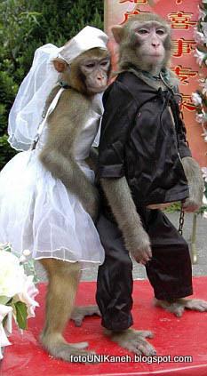 Kawin Paksa Monyet Di bawah Umur