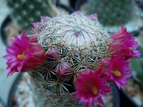 ...ดอกไม้...แสดงความรัก