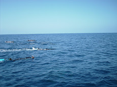 Dolphins - 2007 sighting