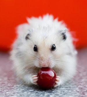 Hamster Hotel Oyunu