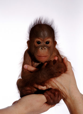 Orangutan Home Services Arizona