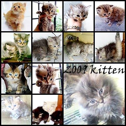 MIX KITTEN 2009