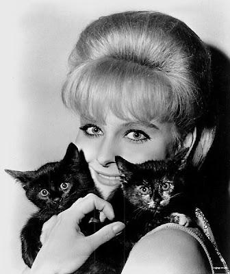 Diane McBain's kittens.