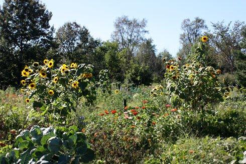 County Farm Park Ann Arbor