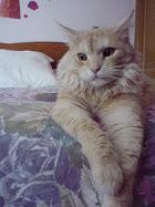 Los gatos se complacen en el silencio, el orden y la quietud, y ningún lugar les conviene mejor que