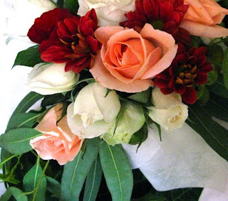 Scarlet Begonia Flower Photos