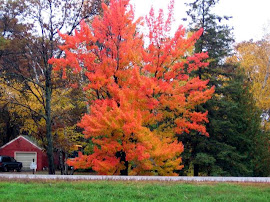 MN fall color
