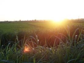 Senja di Pematang Sawah