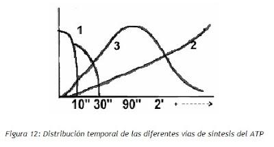 diferencias en sintesis de ATP