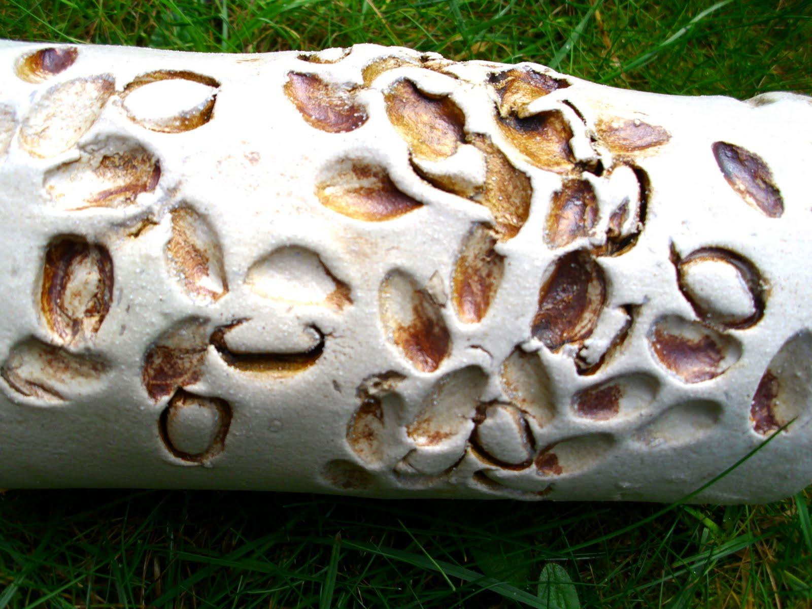 Pistachio Nut Shell Results! | Charlotte Hupfield Ceramics