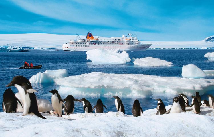 Travel antarctica antarctic cruises cruise antarctica for Where to go in antarctica