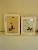 Herbarium i gamle treramme