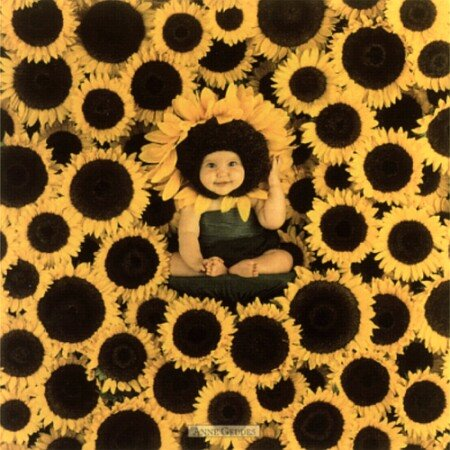 [geddes-anne-sunflower-wall-6600032.jpg]