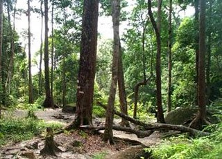 Interesting places in malaysia gunung mountain ledang for Garden shed johor