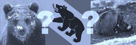 Berns Bärenproblem