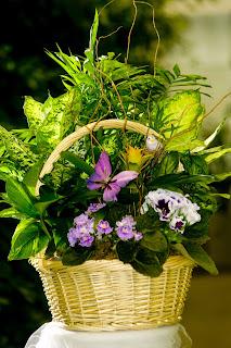 Visser's plants