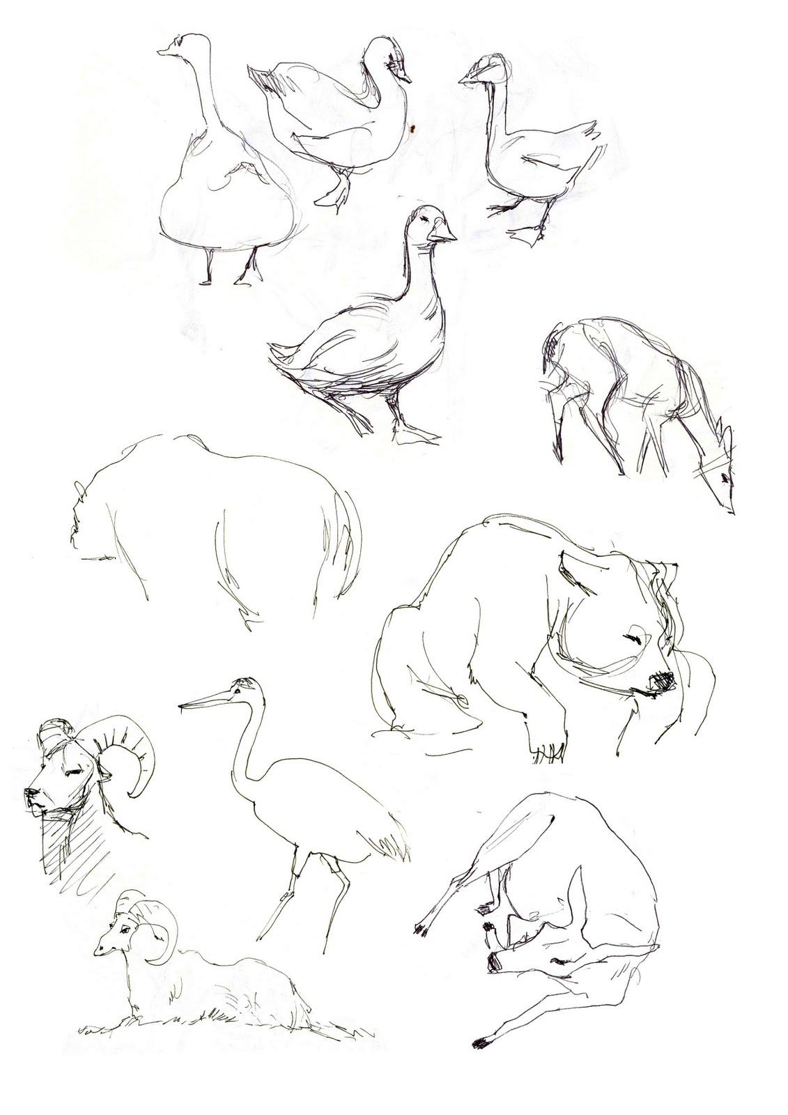Armelle prunier quelques croquis d 39 animaux du biod me de - Croquis animaux ...