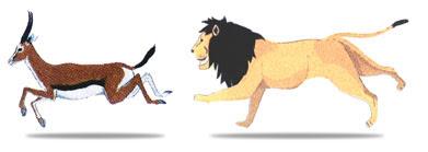 هل تعلم ان الغزال اسرع من الاسد ؟ lion_gazelle.jpg