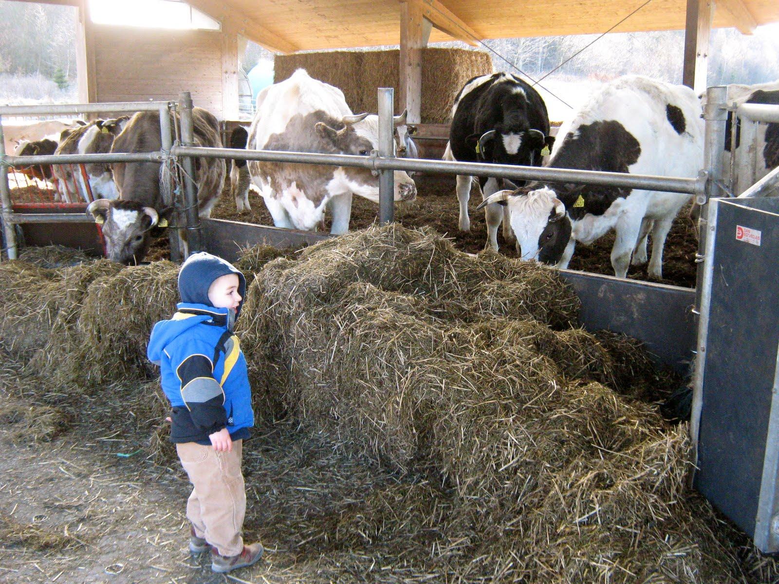 Gammel Estrup agricultural museum hjemmevideo