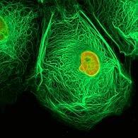 Medicinas, vacunas contra el virus del papiloma humano y el cáncer de útero