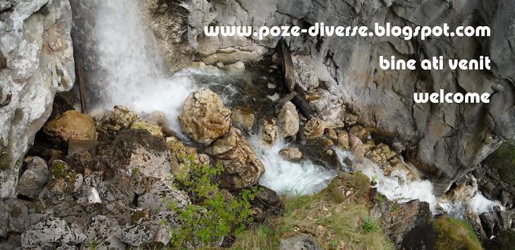 Poze, Natura, Animale, Plante, Romania, Valcea, Ionut Ungureanu