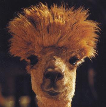 http://3.bp.blogspot.com/_Od9Jxcuw998/SZR42P3wzDI/AAAAAAAAG9w/9smAl05Dvco/s400/camel.jpg
