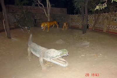Chokhi Dhaani in Jaipur - An alligator and tiger exhibit