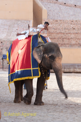 View of elephant and mahout near the Amber Fort in Jaipur